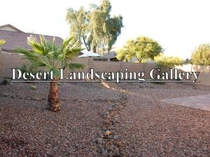 Desert gallery